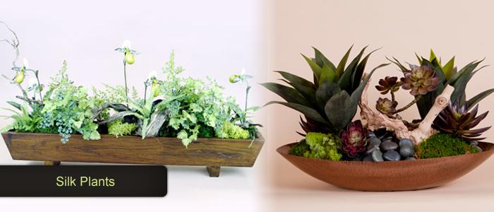 Silk-Plants